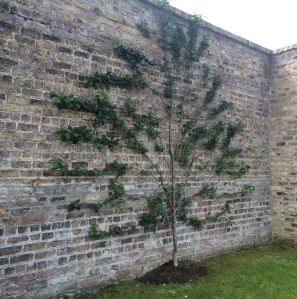 tree walled garden